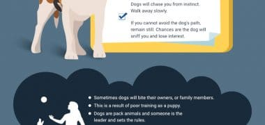 How to Avoid a Dog's Bite